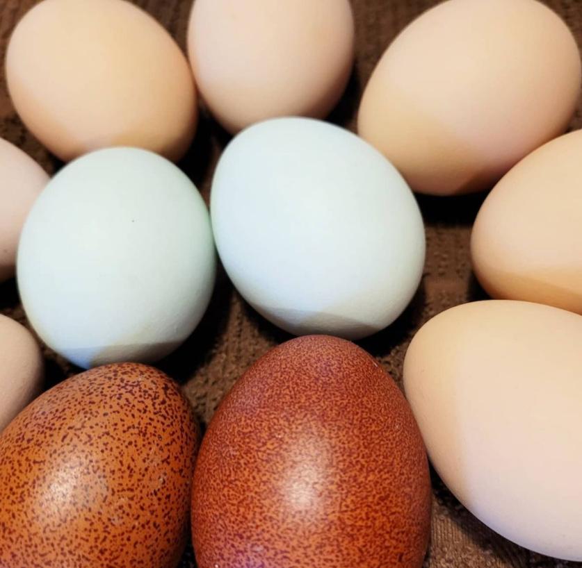 Eggs farmed by Abby